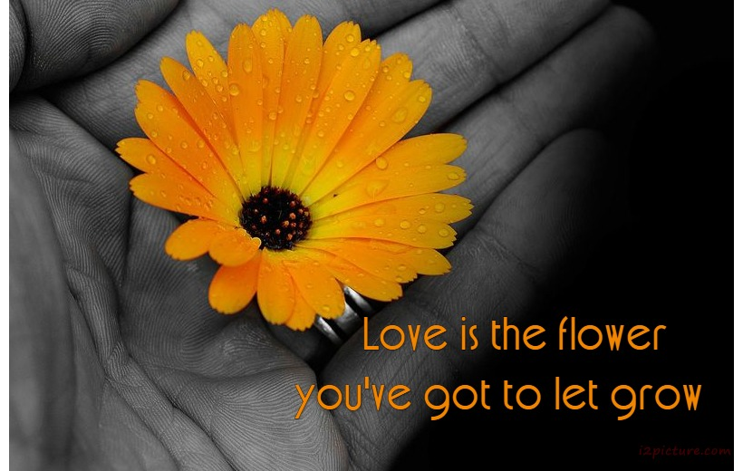 حكم و خواطر - Love Is The Flower You've Got To Let Grow