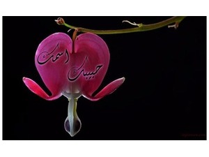 Your lover's name on the Rose heart-shaped