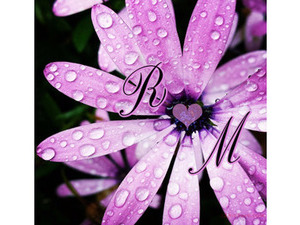 Type your lover on a flower Violet with dew drops